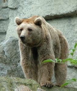 brown-bear-1561087