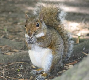 it-s-a-squirrel-1410688